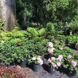 Photo Of Plant Place Nursery Jacksonville Fl United States Shade Loving Plants
