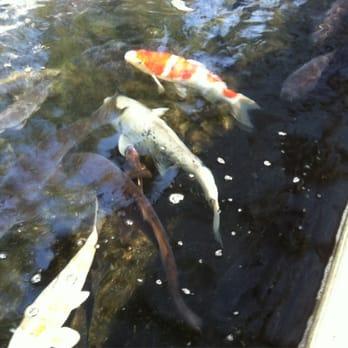 Asahi fancy koi 53 photos 17 reviews local fish for Fancy koi fish