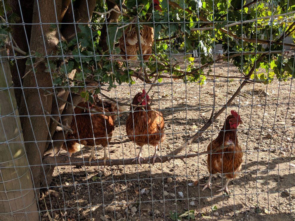 Queens County Farm Museum: 73-50 Little Neck Pkwy, Floral Park, NY
