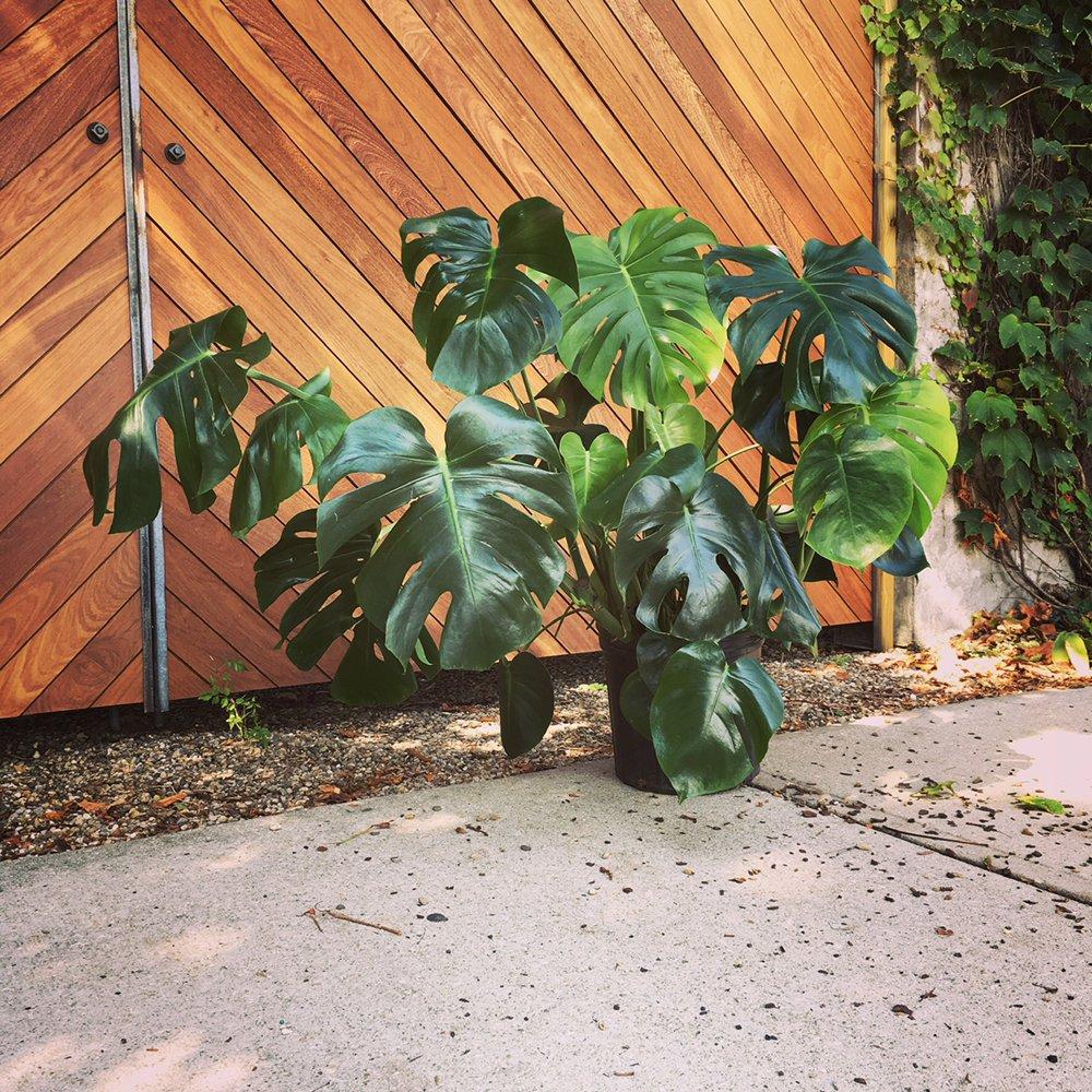 Plant Mode: 75 E Chester, Champaign, IL