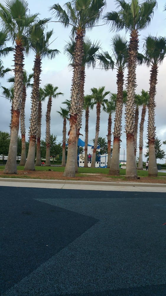 Lovely palm trees - Yelp