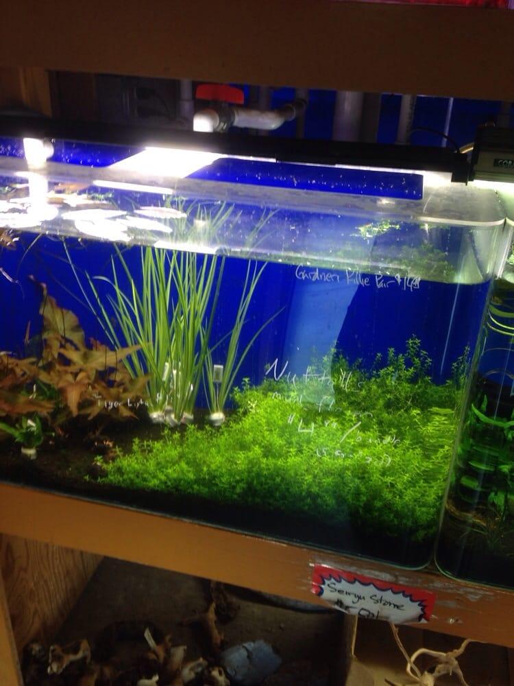 Photos For King Aquarium Yelp