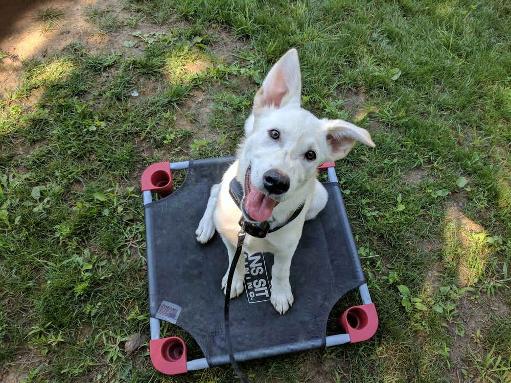 Sit Means Sit Dog Training: 4550 State Route 233, Clinton, NY