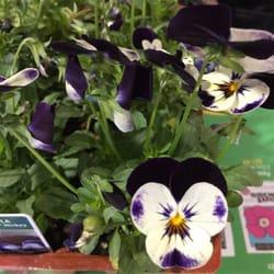 Armstrong Garden Centers 21 Photos 26 Reviews Nurseries Gardening 9939 Carmel Mountain
