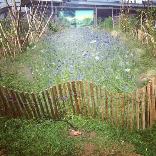 Labyrinthe des rêves et des cauchemars en haut du jardin - Yelp