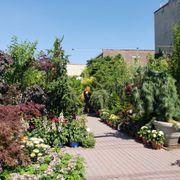 photo of chelsea garden center west brooklyn ny united states - Chelsea Garden Center