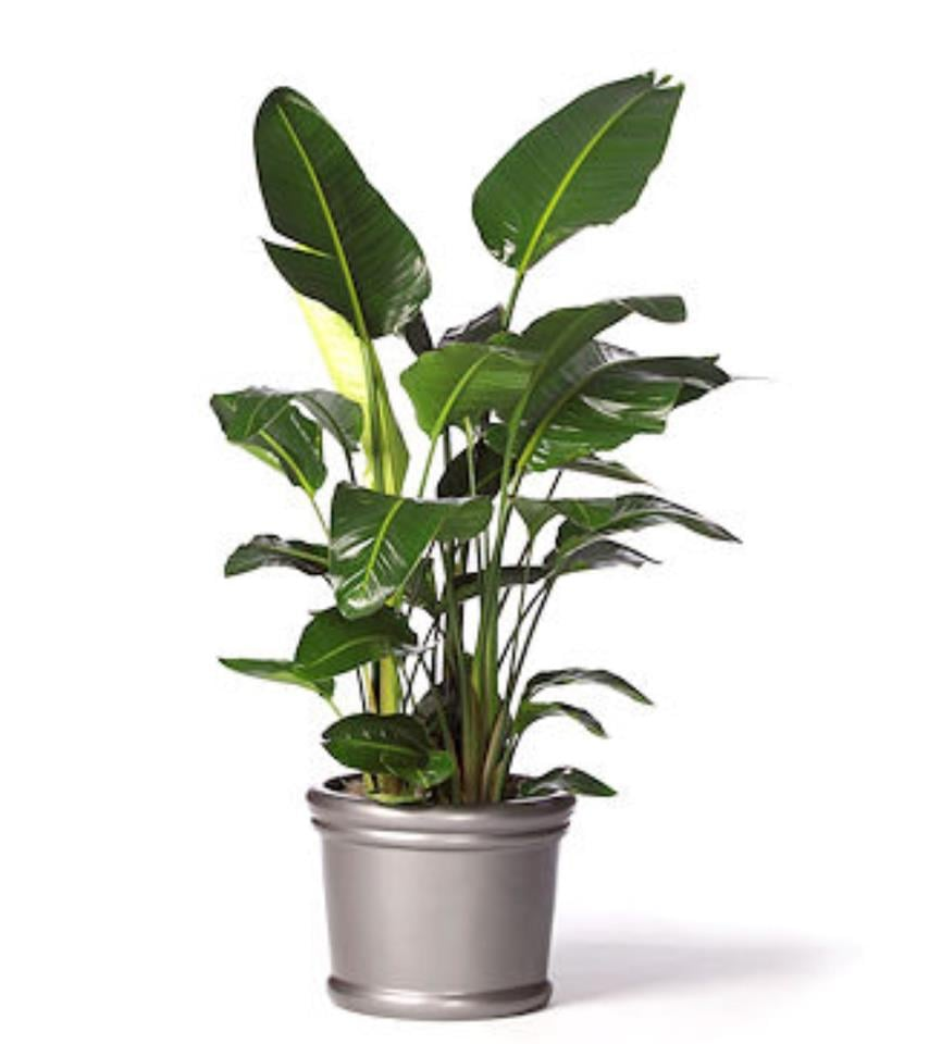 Green Office Plant Service: San Diego, CA