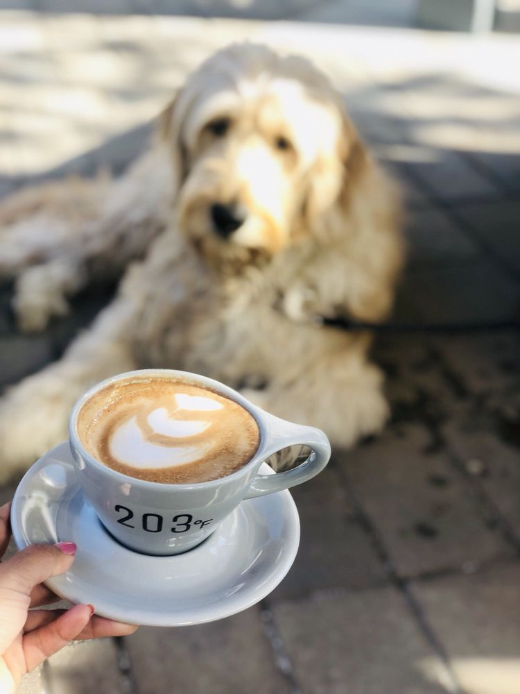Social Spots from 203º Fahrenheit Coffee