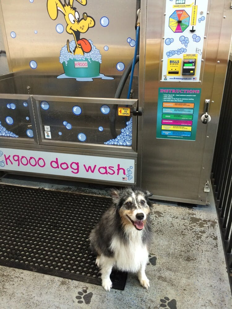 Self service dog wash it worked great yelp photo of kacees world of water rohnert park ca united states self solutioingenieria Image collections
