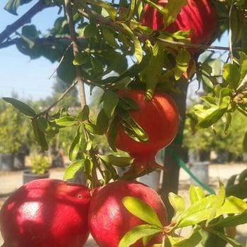 Photo Of Gutierrez Nursery Landscape Fresno Ca United States