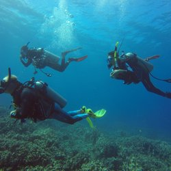Photo Of Blue Wilderness Dive Adventures Waikoloa Hi United States Welcome To
