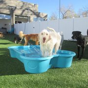 Green dog wash 13 photos 28 reviews pet groomers 2525 the dog spot and the cat pad solutioingenieria Image collections