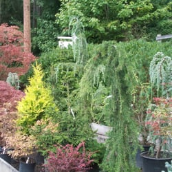 Photo Of Wells Nursery Mount Vernon Wa United States Selection Conifers