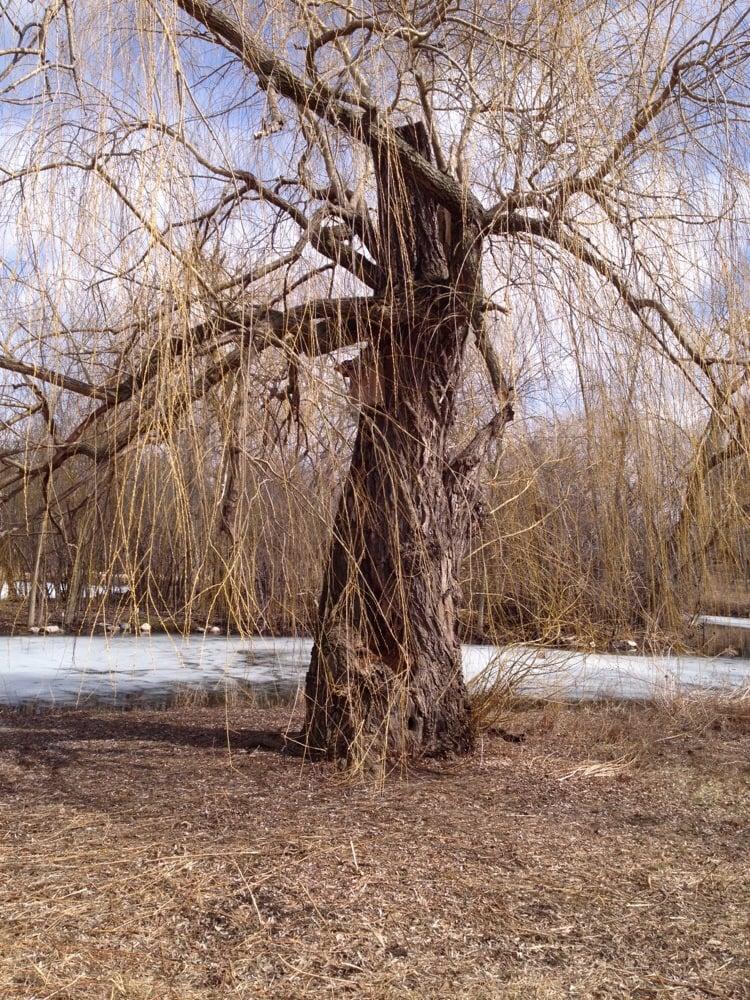 Wildwood Nature Center Park Ridge Il
