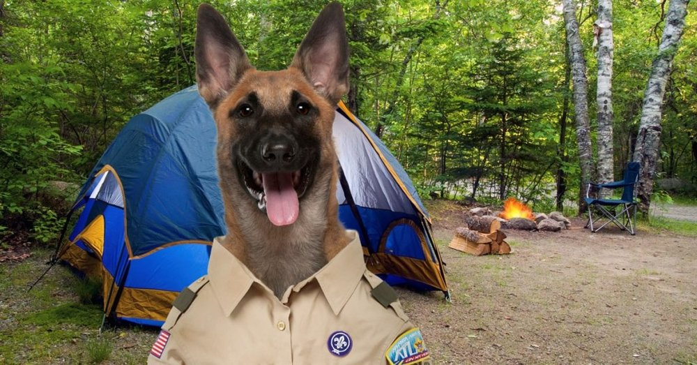 Photo of Camp Canine: Bristol, CT