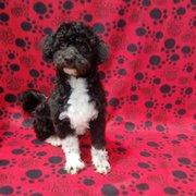 Dan's Kennels - 45 Photos & 18 Reviews - Pet Breeders - 11562