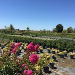 Larawan Ng Green Paradise Nursery Elk Grove Ca Estados Unidos