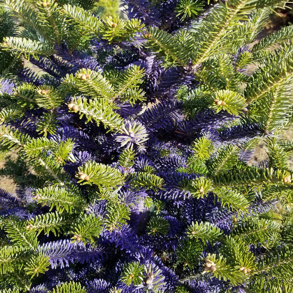 East Wind Christmas Tree Farm: 1216 State Road 19, Marshall, WI