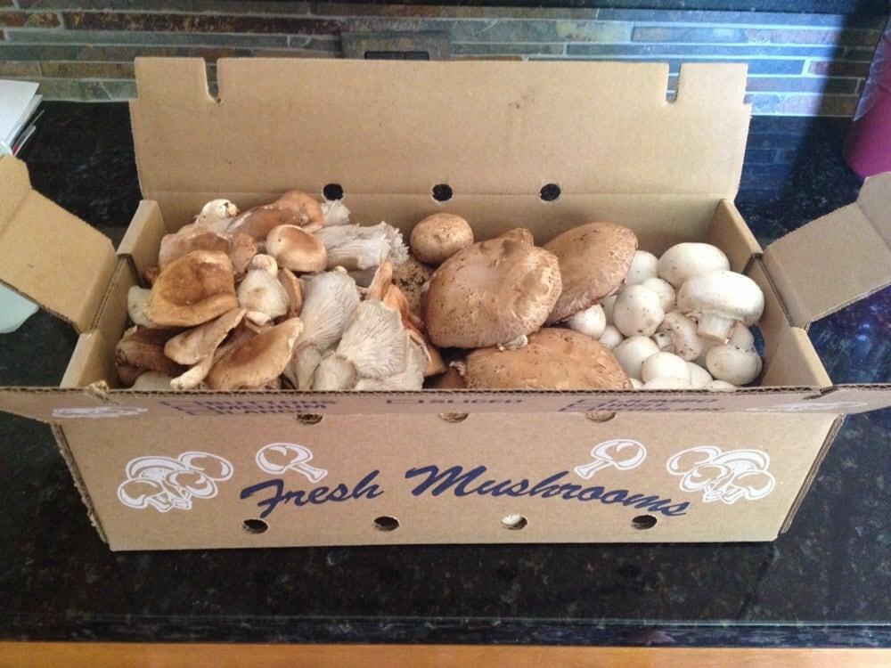 Cutone Mario Mushrooms: Routes 1 & 41, Avondale, PA