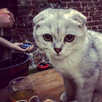 Cat Cafe London Rivington Street