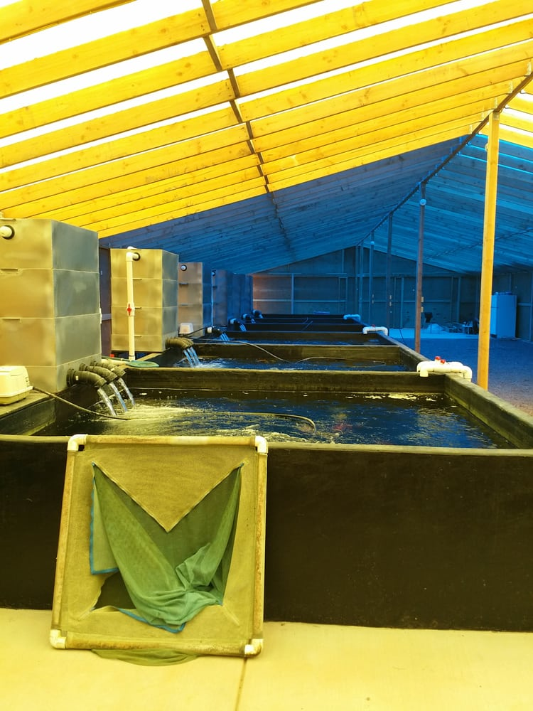 Barstow koi farm pet stores 42072 silver valley rd for Koi fish farm near me