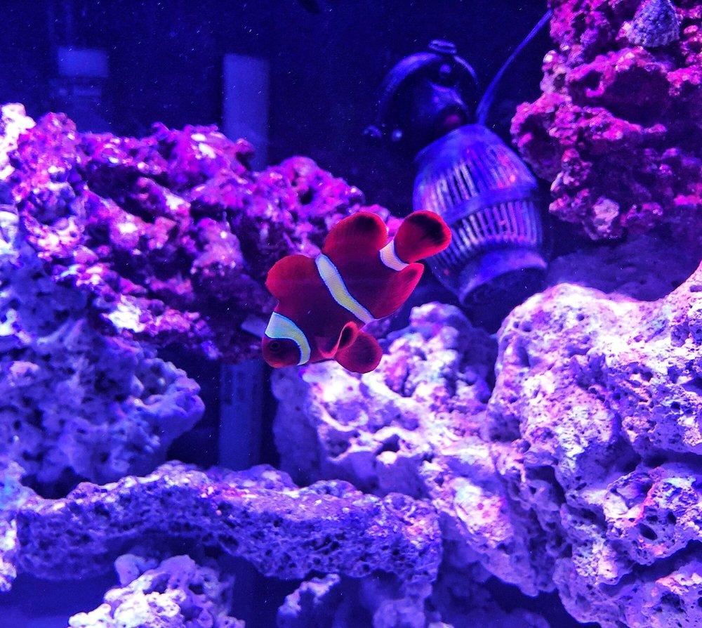 KHC Aquarium: 150-01 Northern Blvd, Queens, NY