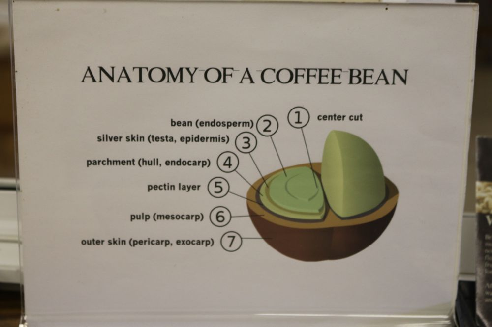 Anatomy of a coffee bean - Yelp