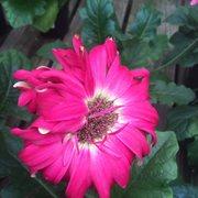Maria gardens center 11 photos nurseries gardening 10301 w 130th st north royalton oh for Maria s garden center