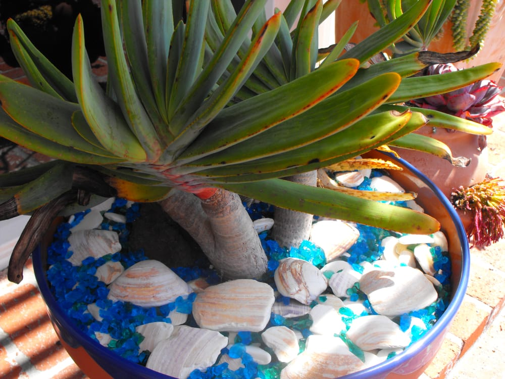 Decorative Landscape Glass And Shells Yelp