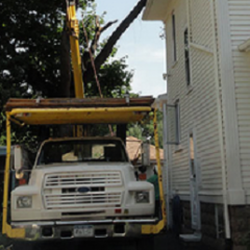 T L Tree And Landscape Photos Tree Services Frey Rd - T and l auto
