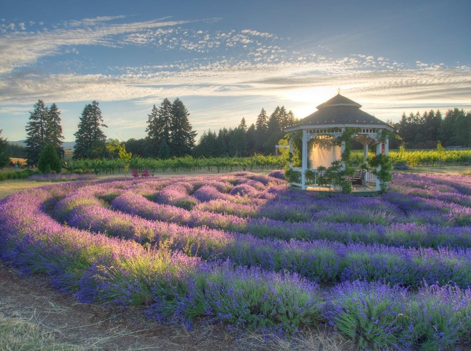 TeBri Vineyards And Lavender: 24880 Orchard Tract Rd, Monroe, OR