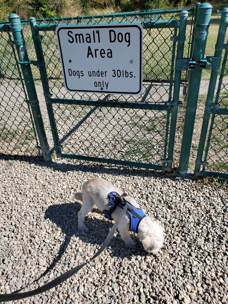 Toad Hollow Dog Park