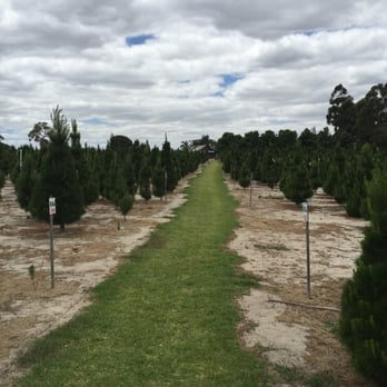 Christmas Trees of Wanneroo - 10 Photos - Gardening Centres - 99 ...