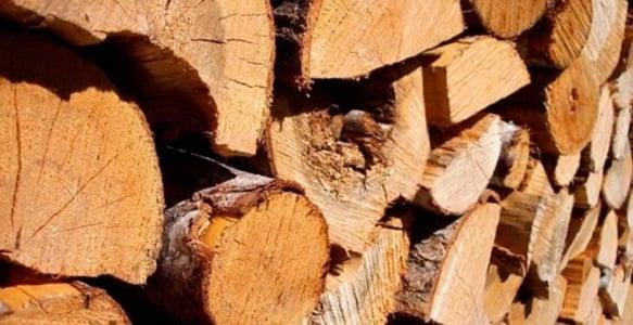 entreprise de valorisation des bois firewood 564 chemin de panisset le pontet vaucluse. Black Bedroom Furniture Sets. Home Design Ideas