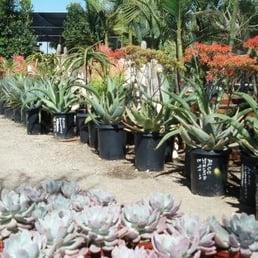 Photo Of Garden View Nursery   Irwindale, CA, United States