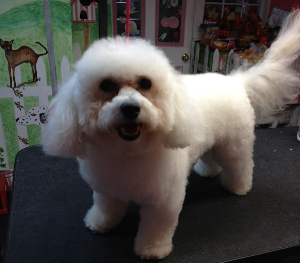 Donna's Pampered Pets: 262 Dundaff St, Carbondale, PA