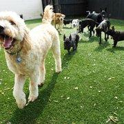 Washpaw 36 reviews pet groomers 4811 trousdale dr nashville the dog spot east nashville solutioingenieria Images