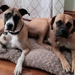 Mastiffs to Mutts - 35 Photos & 13 Reviews - Pet Adoption