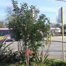 Knotty By Nature Tree Care San Antonio