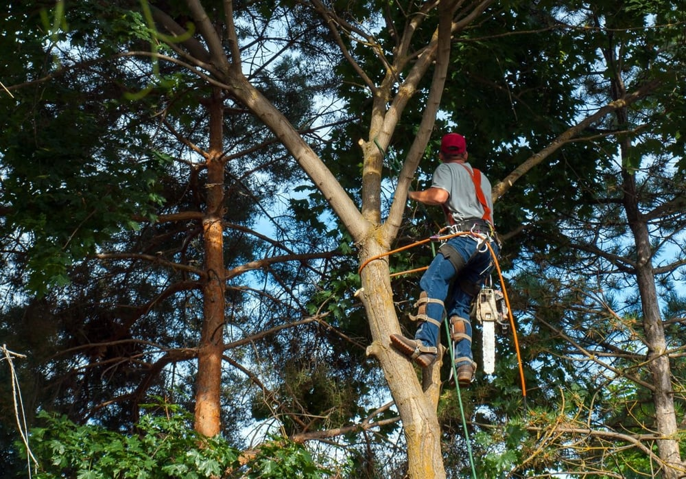 CR Tree Care: Cedar Rapids, IA