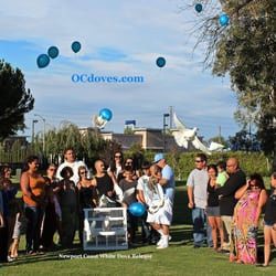 Photo Of Newport Coast White Dove Release Los Angeles Ca United States