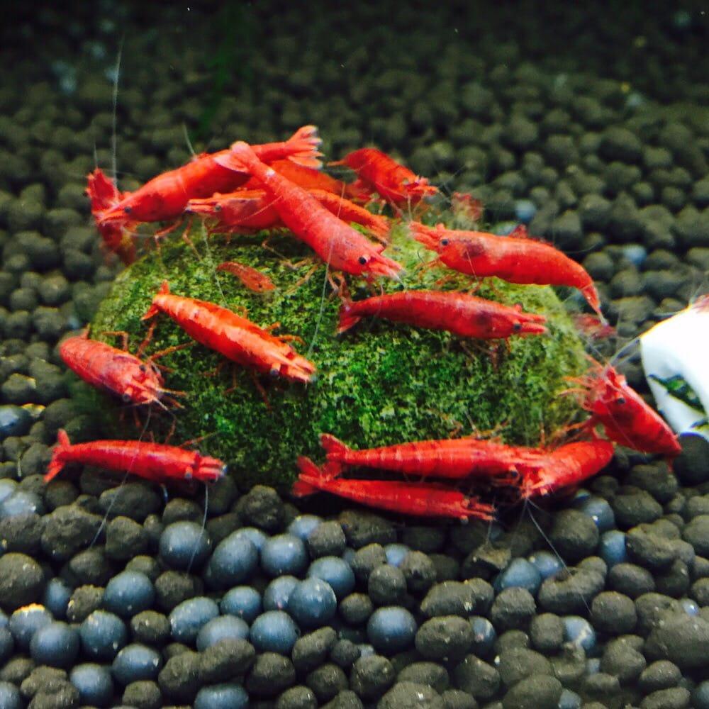 Lotus Aquarium - 118 Photos & 91 Reviews - Aquarium Services - 14704 ...