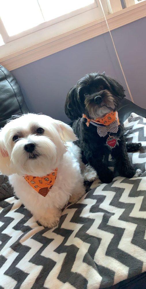 The Dog Pamperer Grooming Salon: 12881 Murphy Grove Ter, Clarksburg, MD