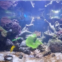 Underwater World - Local Fish Stores - 1561 Morris Ave, Union, NJ