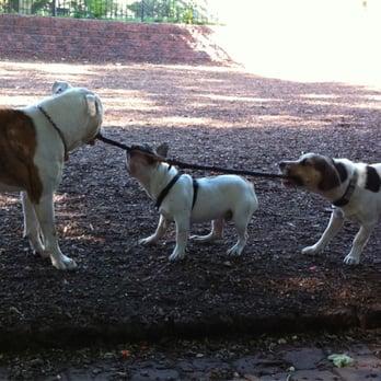 Seger Dog Park Philadelphia