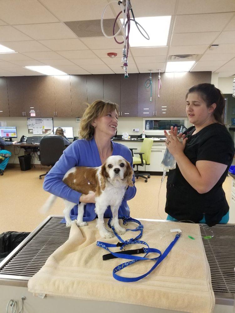Elk Grove Veterinary Specialty & Emergency
