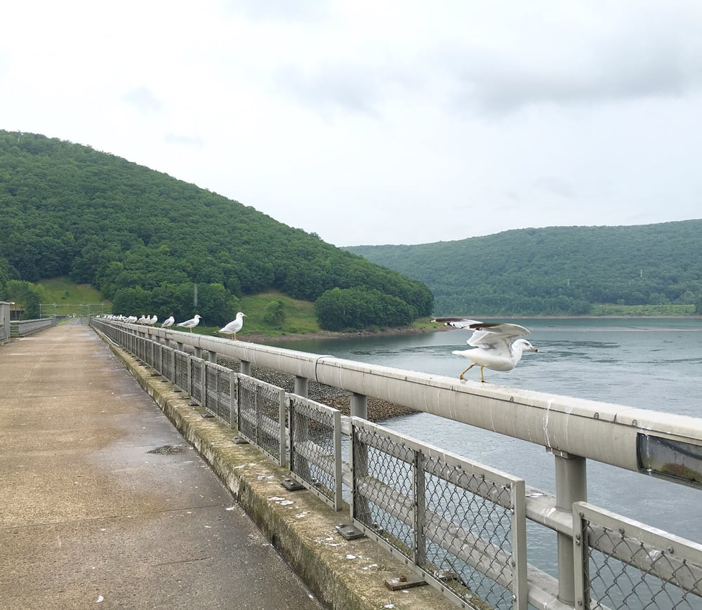Exploring the Southern Shores of the Allegheny Reservoir