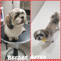 Dog Grooming Copito - 10 Photos - Pet Groomers - 1816 Rutherford
