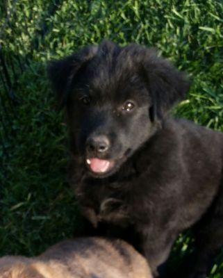 Palomino Valley Pet Rescue