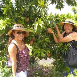 Vuon Co Chin Fruits Farm - 70 Photos & 34 Reviews - Farmers Market